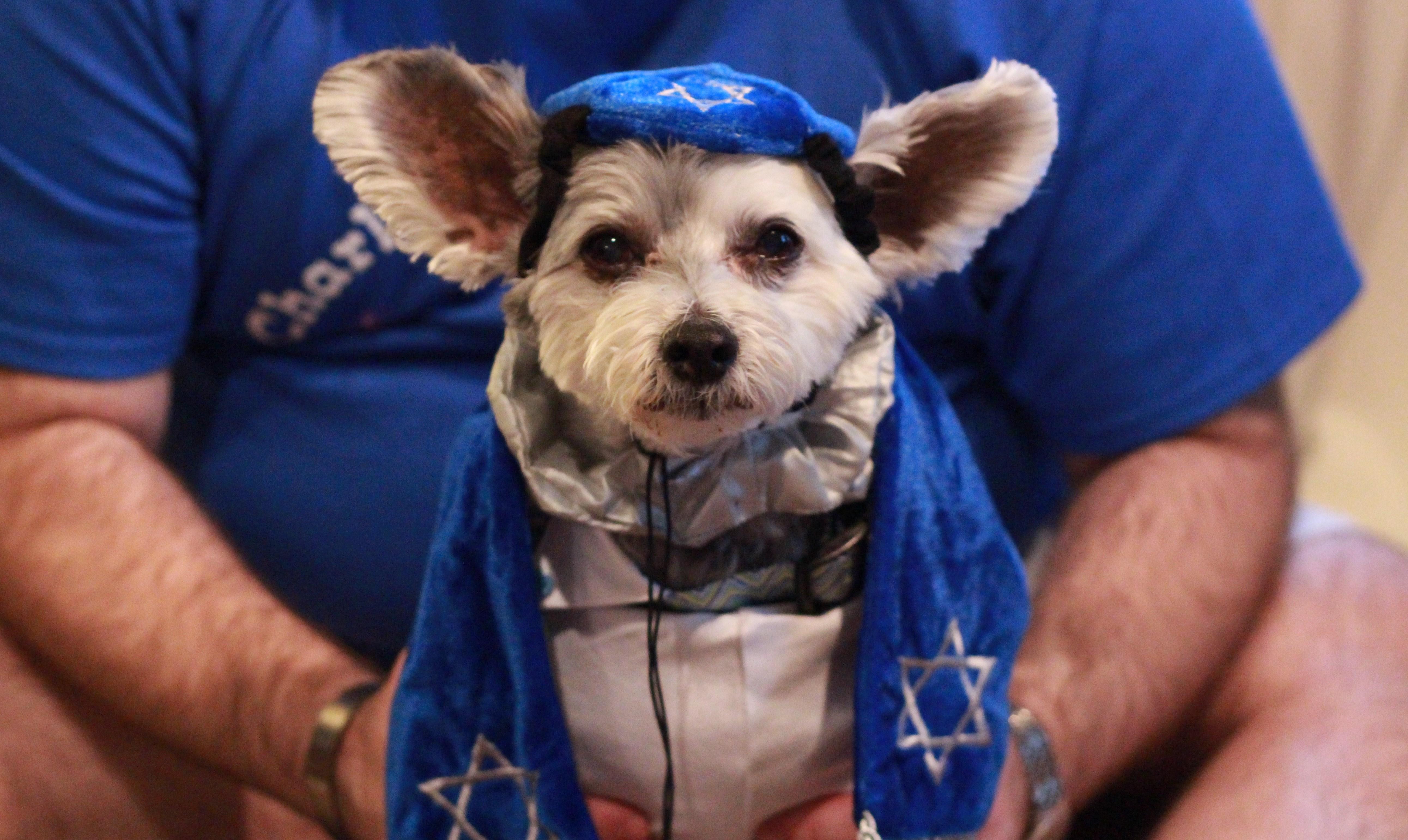 Charley-Bark-Mitzvah-1